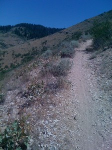 Looking north on the upper part of 5 Mile Gulch Trail
